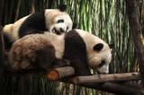 Big panda - 180319701