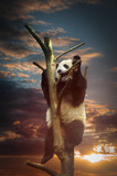 Big panda - 180319712