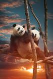 Big panda - 180319782