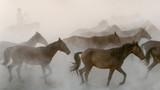 Horses run gallop in dust - 180326185