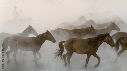 Horses run gallop in dust