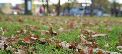 Herbst - 180336914