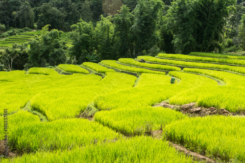 Deurstickers Rijstvelden Wonderful rice terraces in Thailand