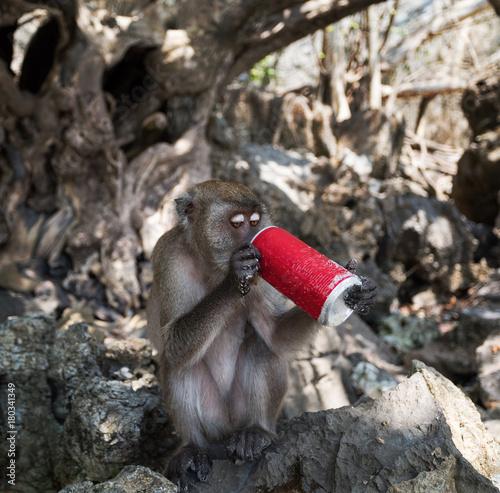 Fotobehang Aap monkey drinking coke