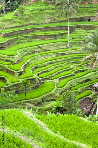 Staande foto Rijstvelden Tarasy ryżowe