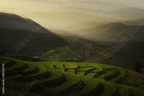 Staande foto Rijstvelden Rice Terrace, Chiang Mai, Thailand