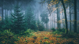 Märchenwald im Herbst