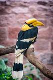 Beautiful portrait of a Horbill bird - wide shot - 180359170