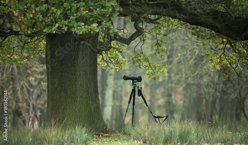 Fotobehang Olijf Tripod with photo camera under big old tree.