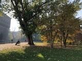 Autunno a Milano - Parco Sempione