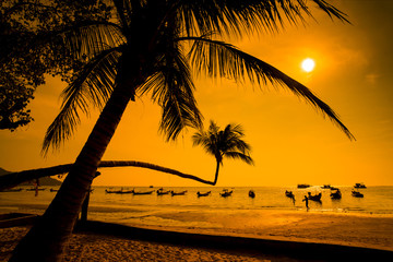Palms at  Sunset  - Koh Tao beach - Thailand