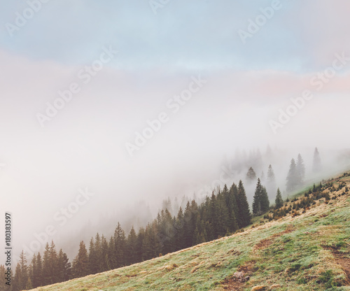Morning fog covered the hills with spruces. Dramatic and gorgeous scene. - 180383597