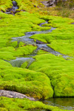 Iceland Small River Stream with green moss - 180408763