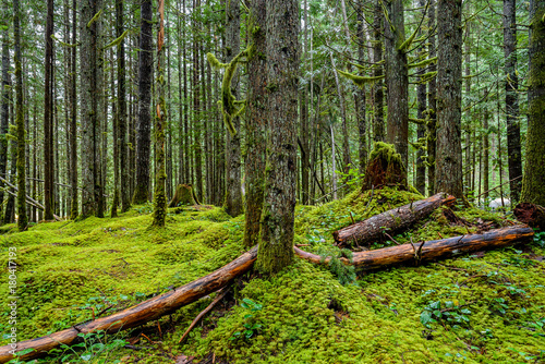 Forest in Silver Lake Provincial Park, BC, British Columbia, Canada