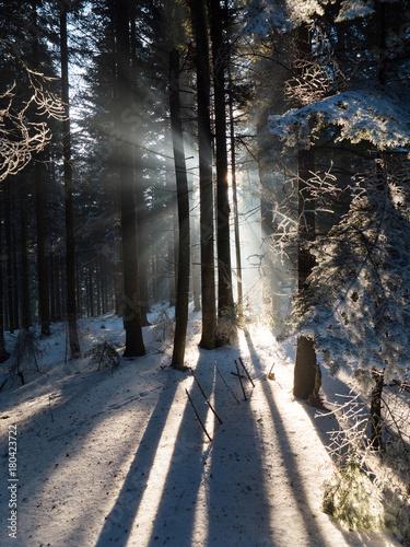 Aluminium Weg in bos Światło słoneczne wśród drzew w zimowym górskim lesie