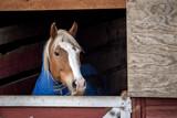 Chestnut Horse Looking out Barn Door - 180430397