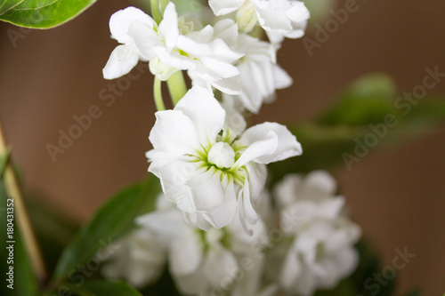 Papiers peints Nature White flower