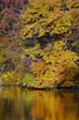 Autumn foliage and pond reflections, New Jersey