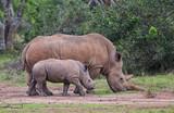 Nashornmutter mit Kind - 180446994