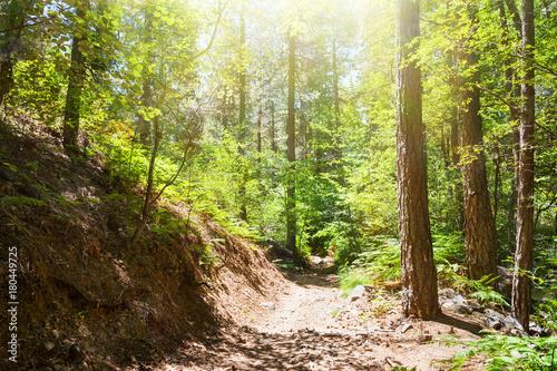 Foto op Plexiglas Natuur Pathway in summer forest. Troodos national park, Cyprus
