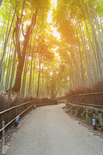 Fotobehang Bamboe Walk way leading to Bamboo forest in Kyoto Japan, natural landscape background