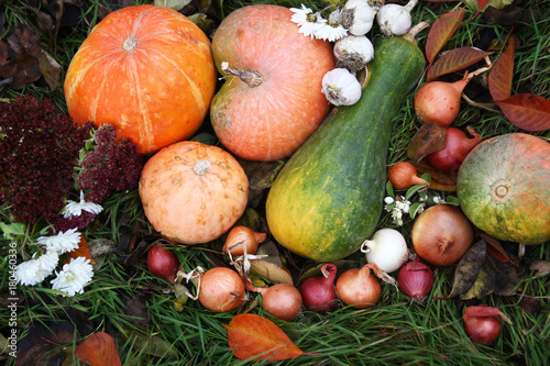 Poster Varied assortment of pumpkins and onions on the grass
