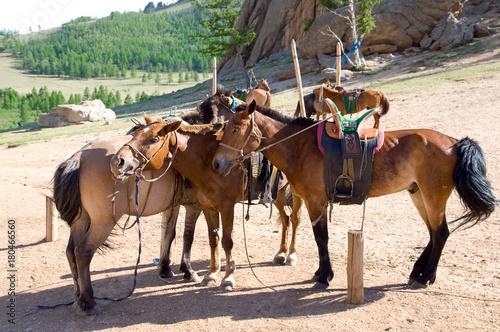 horses at tethering post