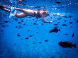 Snorkeling  - 180467752