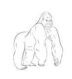 Gorilla Drawing Vector Illustration - 180482747