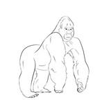 Gorilla Drawing Vector Illustration