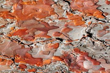 Red Pine Bark Background