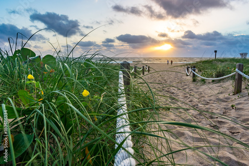 Fotobehang Lavendel green grass yellow flower and sandy path towards sunshine over the ocean