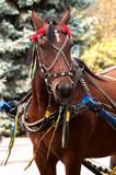 bay horse with decorative bridle portrait, close-up