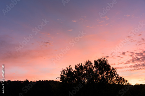 Fotobehang Lavendel sunset with red and violet sky and tree