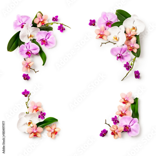 Frame with orchid flowers