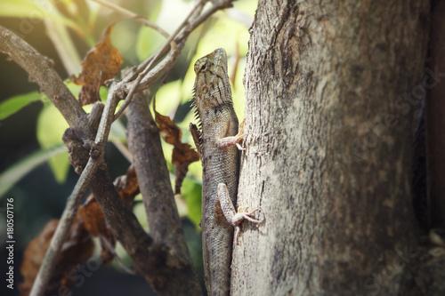 Fotobehang Kameleon Chameleon on the branch