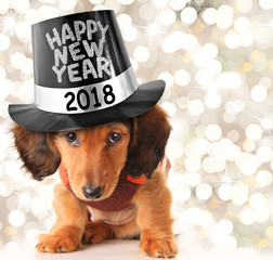 Happy New Year 2018 puppy