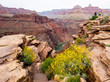 Grand Canyon Vista with Wildflowers and River