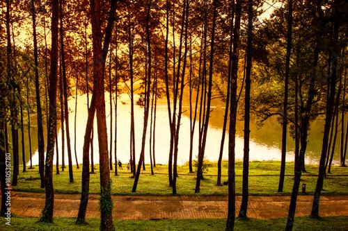 Foto op Plexiglas Bruin Morning at Pang Ung pine forest park nature scene