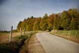 Beautiful road in autumn landscape - 180558525