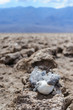 Carcass of a seagull in Death Valley