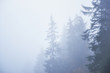 Misty beech forest on the mountain slope in a nature reserve