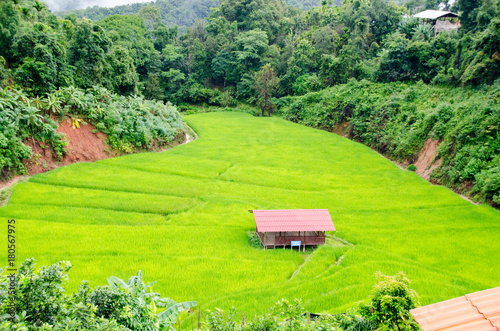 Poster Lime groen Grass. Fresh green spring grass with hut. Soft Focus. Abstract Nature Background
