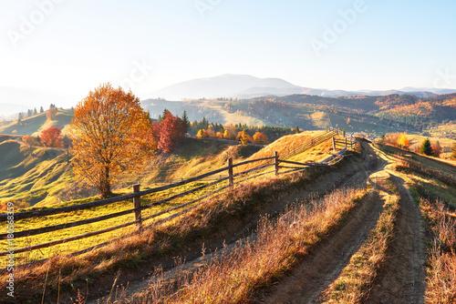 Plexiglas Herfst birch forest in sunny afternoon while autumn season. Autumn Landscape. Ukraine.