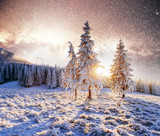 magical moment, snow covered trees. Winter landscape.