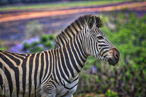 Fototapeta Swaziland