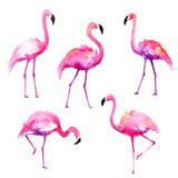 Set of Hand-Painted Watercolor Flamingos