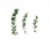 Fototapety green leaves eucalyptus on white background. flat lay, top view