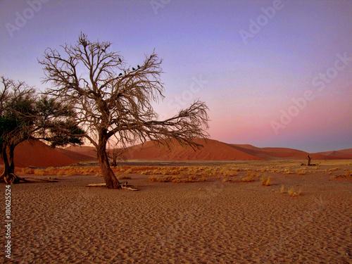 Fotobehang Diepbruine Namibia