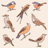 set of the drawn wild birds